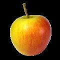 Champion apple